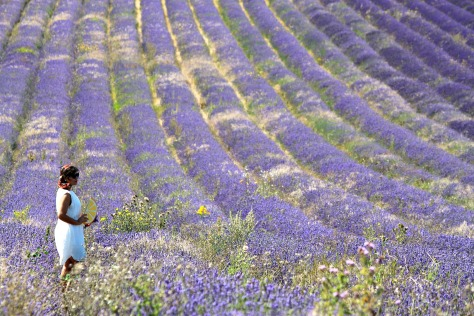 Monki Clutch X Lavender Lush X Sun Worshipping Sunflowers