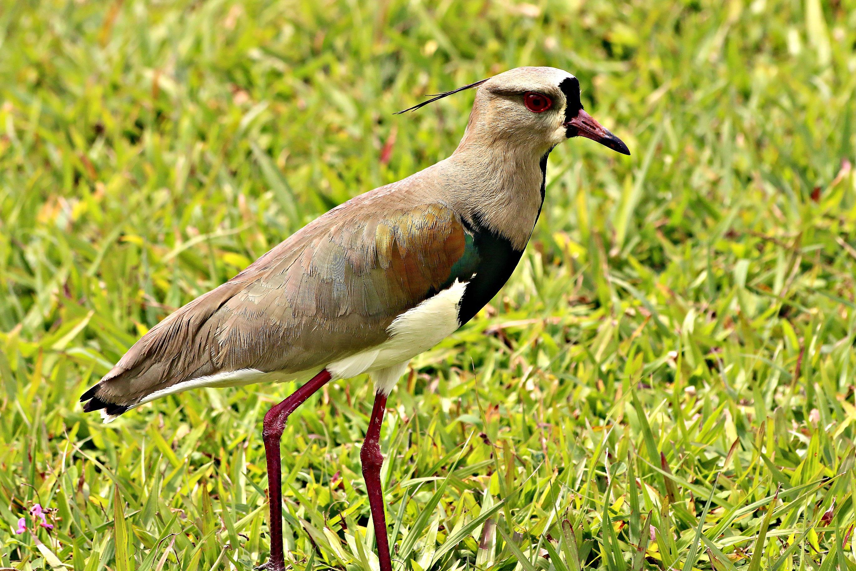 argentina mighty iguaz u00fa falls onetimefashionista got birds in the condo got birds in my ear