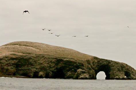 Las Islas Ballestas: The Magic Island of Millions Birds, Sea lions and Penguins