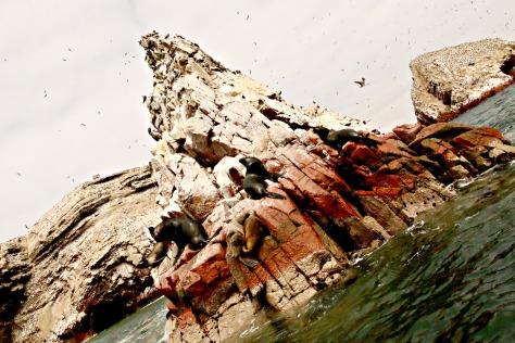 Dozying sea lions enjoying a day at the beach