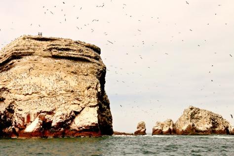 Many, many guano producing sea birds