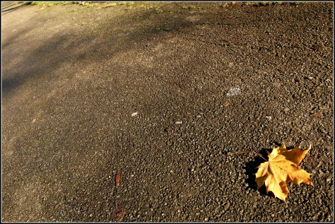 If you take a minute to look closely at fallen leaves you can see all sorts of intriguing evidence