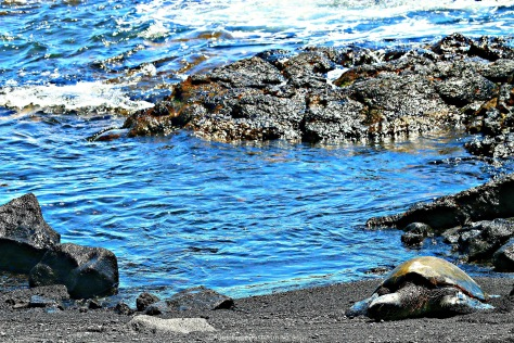This is where you find the green sea turtles basking on the beach
