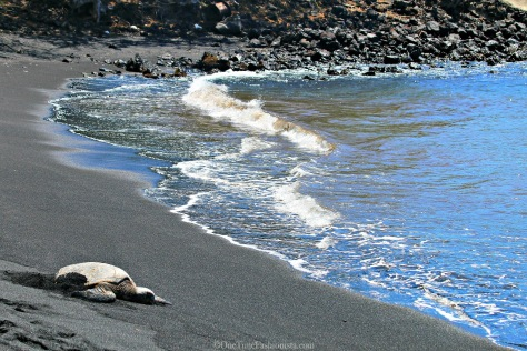 The absolute treat is the sea turtles that often rest on the beach