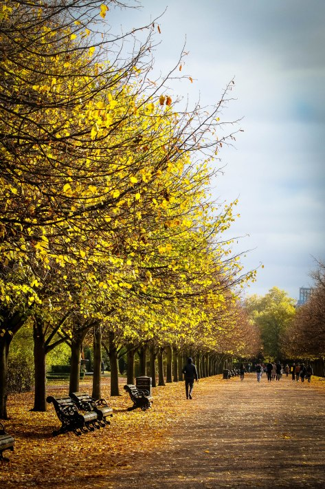 Golden Leaves of Regent's Park London